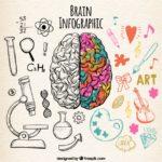 funciones-del-cerebro-y-sus-habilidades
